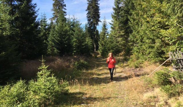 Wanderin durch den Wald