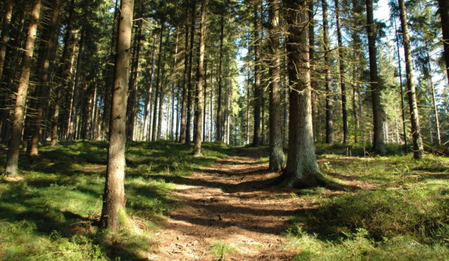 Wanderweg durch einen Wald